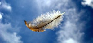 feather-in-the-wind[1]
