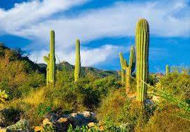 images9YBKSP53 cactus