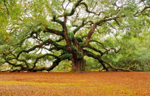 old-tree[1]